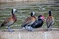 Bird in a pond2.jpg