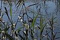 Bird observation spot 04.jpg