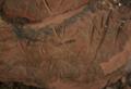 Bird paw prints petroglyph Lorito Picada rock art from Amambay, Paraguay.png