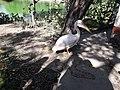 Birds20171111 131835.jpg