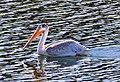 Birds (17819176746).jpg