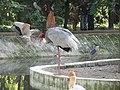 Birds at Childrens Park, Guindy,Chennai. - panoramio.jpg