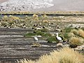 Birds at Laguna Santa Rosa (4320091335).jpg
