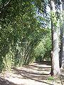 Birmingham Botanical Gardens - Bamboo grove 2.jpg
