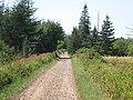 Black Bear on Trans-Canada Trail near Baie Verte, NB (36905308615).jpg
