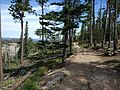 Black Elk Peak hike 05.jpg