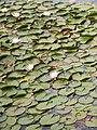 Bled (9783641854).jpg