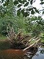 Bloomfield Provincial Park IMG 8175 (1849016958).jpg