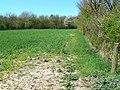 Bloxham Copse near Crofton - geograph.org.uk - 406161.jpg