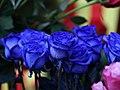 Blue Roses Rosas Azules (209436641).jpeg