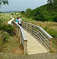 Boardwalk, Ards Forest Park - geograph.org.uk - 901204.jpg