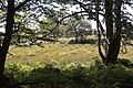 Bog in Backley Bottom seen from Bratley Wood - geograph.org.uk - 41357.jpg
