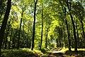 Bois de la Louvière - Livierenbos, Flobecq - Vloesberg 11.jpg
