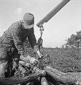 Bosbewerking, arbeiders, boomstammen, Bestanddeelnr 251-9733.jpg