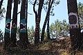 Bosque de Hirosima 02-02.jpg