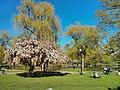 Boston, MA, USA - panoramio (9).jpg