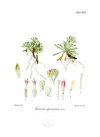 Botany of Antarctica-PL017-0039.jpg
