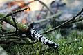 Branche Brûlée.jpg