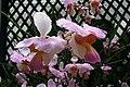 Brasilien Botanischer Garten Rio Orchidee1.jpg