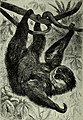 Brehm's Life of animals - a complete natural history for popular home instruction and for the use of schools. Mammalia (1896) (20419811541).jpg