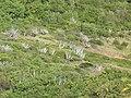 British Virgin Islands - panoramio (2).jpg