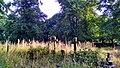 Brompton Cemetery 2.jpg