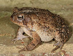 Image Result For Tadpoles To Frogs