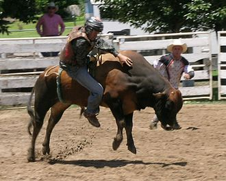 Australian rodeo - Bull riding