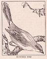 Butcher Bird page 429.jpg