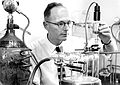 CSIRO ScienceImage 11342 Dr Syd Leach at work at the CSIRO Parkville laboratory in the early 1960s.jpg
