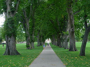 Colorado State University - The Oval today, leading towards the Administration Building