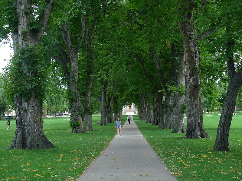 File:CSU The Oval4.jpg