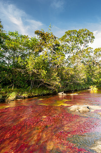 แม่น้ำห้าสี: Cano Cristales,