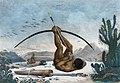 Caboclo by Jean-Baptiste Debret 1834 2FXD.jpg