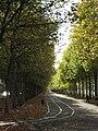 Caen courskoenig automne.jpg
