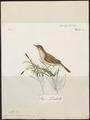 Calamodyta baeticata - 1796-1808 - Print - Iconographia Zoologica - Special Collections University of Amsterdam - UBA01 IZ16200091.tif