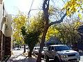 Calle Roque S Peña GC - 2.jpg