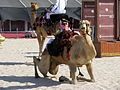 Camel dismount (3204859096).jpg