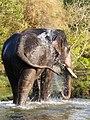 Camp Elephant Bath Self Cropped Mudumalai Mar21 A7C 00419.jpg