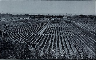 Canadian wine - A vineyard in Canada, 1905. The first commercial winery was opened in Canada in the mid-19th century.