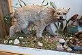 Canada Lynx (29781483297).jpg