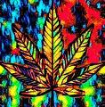 Cannabis Leaf.jpg
