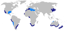 World map with dark blue shading in the western Mediterranean, off northwest and southern Africa, Argentina, northeast Asia and Japan, southern Australia, around New Zealand, around Baja California, and off Peru and northern Chile, and light blue shading in the eastern Mediterranean, the Gulf of Mexico, northern Australia, and further south along Chile