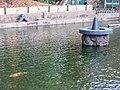 Carp in Pond of Hakusan jinja (Kasugai).jpg