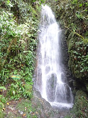 Natural resource - The Carson Fall in Mount Kinabalu, Malaysia is an example of undisturbed natural resource. Waterfalls provide spring water for humans, animals and plants for survival and also habitat for marine organisms. The water current can be used to turn turbines for hydroelectric generation.