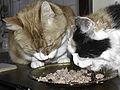 Cats Eating.jpg