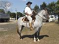 Cavalo crioulo 240606 REFON.jpg