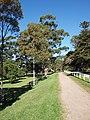 Centennial park in Sydney (16).jpg