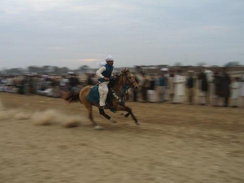 Ch Asifs Hussains Horse