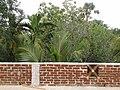 Chandakuda, Odisha 755006, India - panoramio (1).jpg